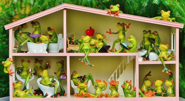 frogs-1382827_1920.jpg