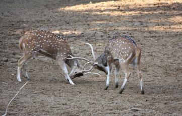 deers-88989_1920.jpg